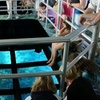 Up to 36% Off Glass-Bottom-Boat Cruise