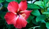 Flamingo Road Nursery - Flamingo Groves: $20 for $40 Worth of Plants and Garden Accessories at Flamingo Road Nursery in Davie