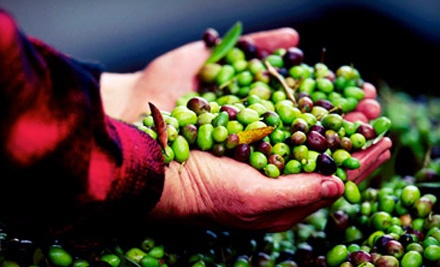 Winery and Olive-Oil-Press Tour and Tasting Package for 2 (a $95 value) - Pietra Santa Winery in Hollister
