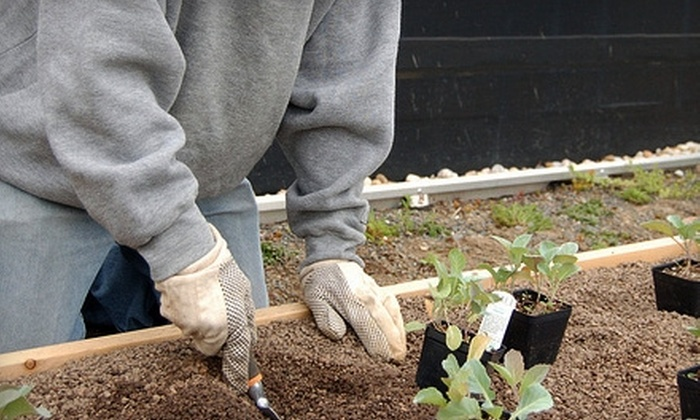 Bread for the City - Washington DC: Donate $10 to Help Bread for the City Purchase and Install Plants for its Urban Rooftop Gardens with a Donor Providing up to $2,000 in Matching Funds