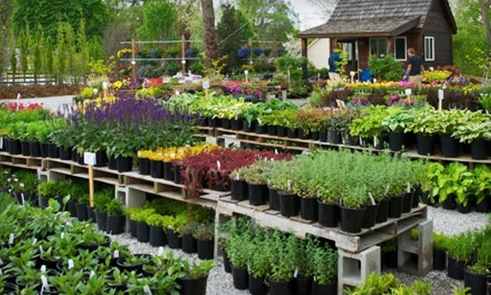 Narrow Tree Nursery - Parkdale - Walden: $25 for $50 Worth of Plants at Narrow Tree Nursery