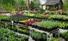 Narrow Tree Nursery - Parkdale - Walden: $25 for $50 Worth of Plants at Narrow Tree Nursery