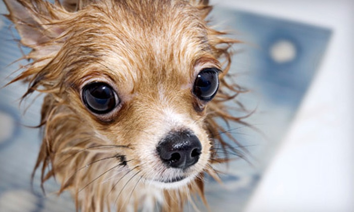 Friendly Paws Grooming - Village Seven: Spa Day for Small, Medium, or Large Dog at Friendly Paws Grooming (Up to 56% Off)