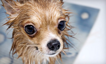 Spa Day for a Dog Up to 20 Pounds - Friendly Paws Grooming in Colorado Springs