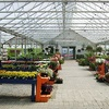 Half Off Plants, Shrubs, and Gardening Supplies