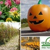 Fall Fun Festival - South Columbus: $4 for One General Admission Ticket to Fall Fun Festival