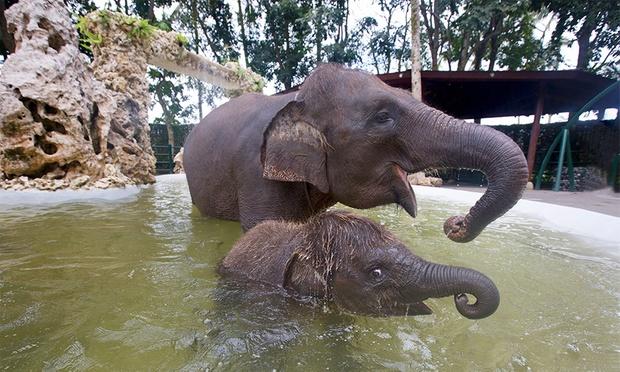 Bali: Elephant Ride & Show 1
