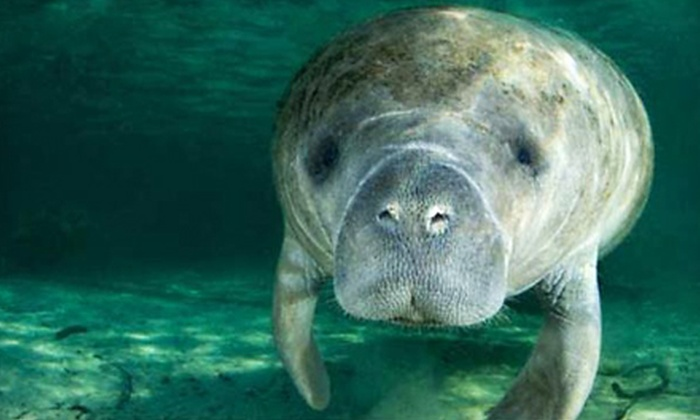 Manatee Guides - Multiple Locations: $34 for a Manatee-Watching Kayak Tour from Manatee Guides ($69 Value)