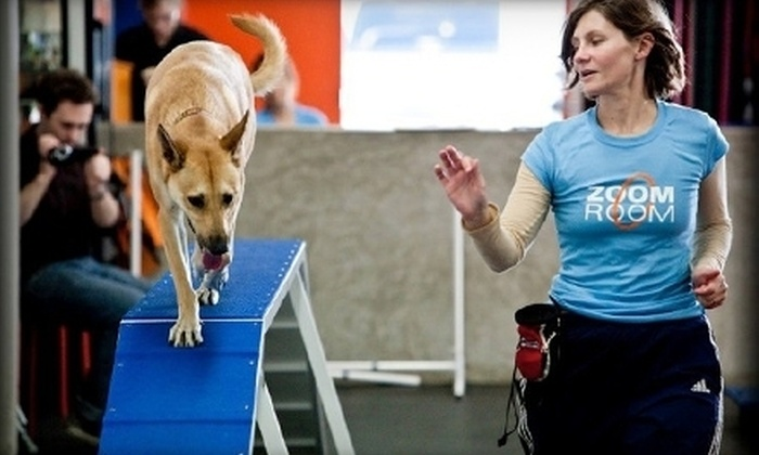 Zoom Room Claremont - Claremont: Single or Six-Week Dog-Training Class at Zoom Room Claremont (Up to 57% Off)