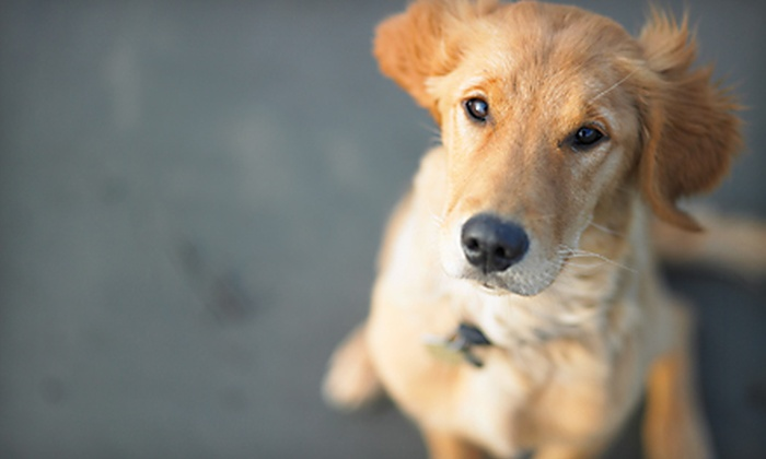 Chicago Urban Tails - Chicago: $29 for Five 25-Minute Dog Walks from Chicago Urban Tails (Up to $75 Value)