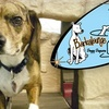 Barkalounge Doggy Daycare - Beech Grove: $10 for One Day at Barkalounge Doggy Daycare ($25 Value)