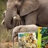 Half Off Kids' Animal Magazine Subscription