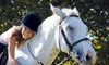Featherbrook Farm LLC - Corcoran: Private Lesson, Semi-Private Lesson for Two, or Day with Horses at Featherbrook Farm in Corcoran