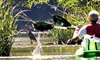Paddle Creek - Paddle Creek: 90-Minute Kayaking Trip for One or Two, Valid Friday–Sunday or Monday–Thursday at Paddle Creek (Up to 55% Off)
