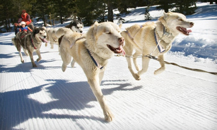 Hidden Meadow Farms - Huntsville: One-Hour Dog Sled Tour for One or Two at Deerhurst Resort (Up to 54% Off)