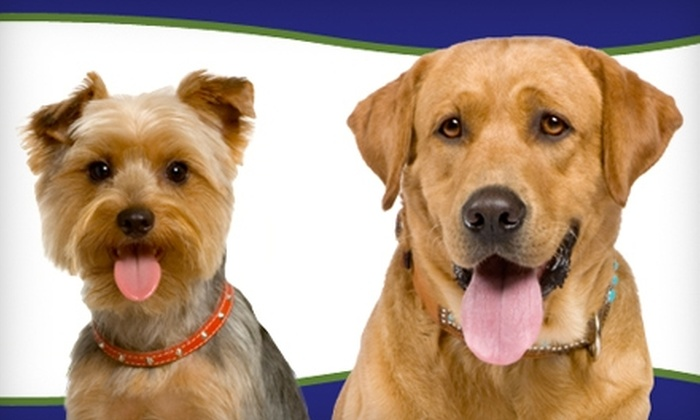 Folsom Dog Resort & Training Center - Folsom: $20 for $50 Worth of Any Service at Folsom Dog Resort & Training Center