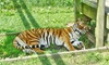 Jo-Don Farms - Sturtevant: The Zoo at Jo-Don Farms Admission for Two, Four, or Six to Jo-Don Farms (40% Off)