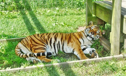 The Zoo at Jo-Don Farms Admission for Two, Four, or Six to Jo-Don Farms (40% Off)
