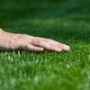 60% Off Lawn-Winterization Package