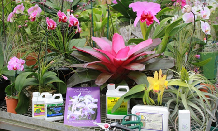 Sundance Orchids & Bromeliads - Briarcliff Farms: Plants and Gardening Supplies or Orchid Arrangements at Sundance Orchids & Bromeliads (Half Off)