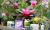 Half Off at Sundance Orchids & Bromeliads