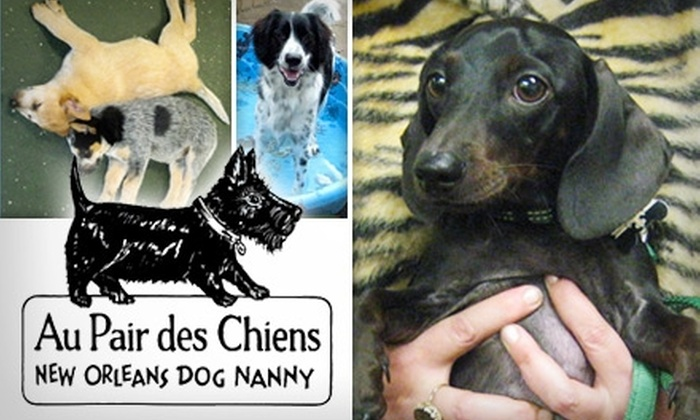 New Orleans Dog Nanny - Tulane - Gravier: $35 for Three Days of Dog Daycare or Two Nights of Overnight Pup Boarding from New Orleans Dog Nanny (Up to $80 Value)