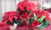 $10 for Holiday-Poinsettia Package at Plant Farm