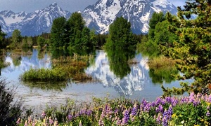 Grand Teton and Yellowstone Wildlife Tours: Grand Teton and Yellowstone Tours from BrushBuck Wildlife Tours. Price per Person Based on Double Occupancy.
