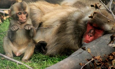 Discovery Wildlife Park - Discovery Wildlife Park in