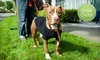 (G-Team) Motley Zoo Animal Rescue - Union Hill-Novelty Hill: $14 Donation to Help Motley Zoo Animal Rescue Supply 25 Adoptable Dogs with a Tote of Basic-Care Necessities