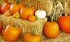 Half Off at Big Wave Dave's Pumpkin Patch
