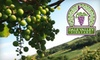 Dale Valley Vineyard - Jackson: $16 for a Wine Tasting for Up to Four, a Bottle of Wine, and Four Souvenir Wine Glasses at Dale Valley Vineyard ($32 Value)