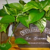 Half Off Potted Plants in San Mateo
