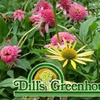 Dill's Greenhouse - South Columbus: $15 for $30 Worth of Goods at Dill's Greenhouse