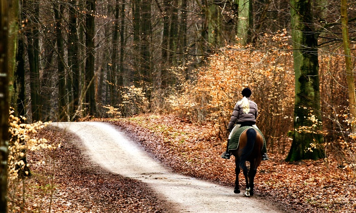 North Hill Equestrian - North Hill Equestrian: Horseback Riding at North Hill Equestrian (Up to 53% Off).  Six Options Available.