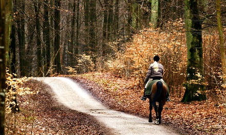 Horseback Riding at North Hill Equestrian (Up to 53% Off).  Six Options Available.