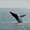 Up to 54% Off Whale- and Dolphin-Watching Cruise