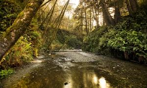 California Lodge near Redwoods and Ocean