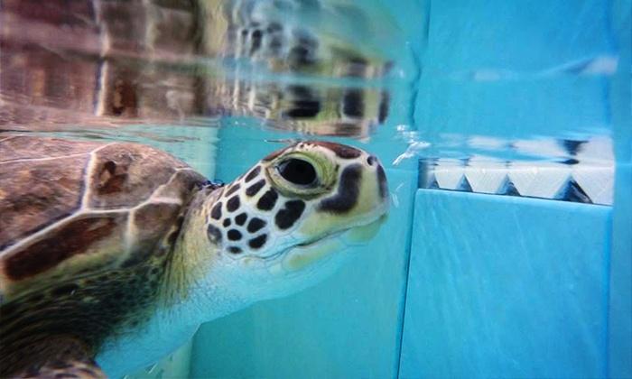 Georgia Sea Turtle Center - Jekyll Island: Georgia Sea Turtle Center Visit for Two or Four (Up to 39% Off)