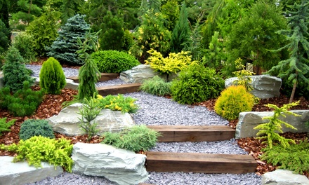 $20 for $40 worth of Annuals, Perennials, Shrubs and Trees from Blossom Knoll Nurseries