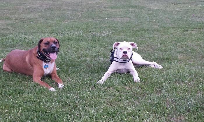 Rezultz K-9 Training LLC - Taftville: Four-Week Dog-Obedience Course from Rezultz K-9 Training LLC (50% Off)