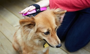 Nik Nacks Dog Grooming: Dog Grooming for a Small, Medium or Large Dog at Nik Nacks Dog Grooming (Up to 44% Off)