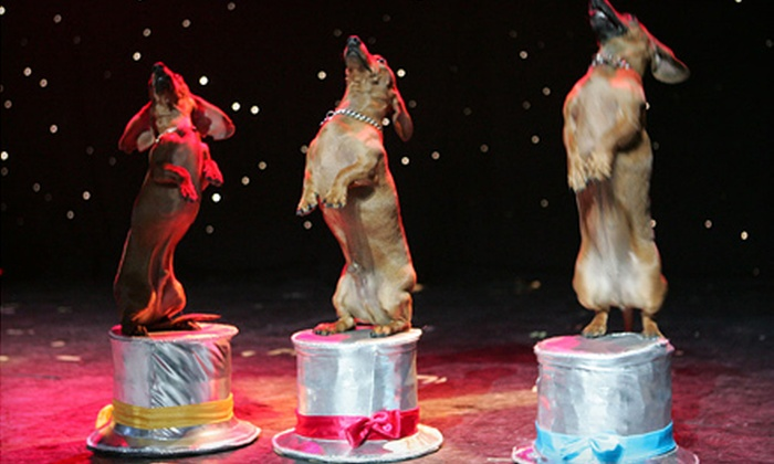 Popovich Comedy Pet Theater - Las Vegas: Popovich Comedy Pet Theater Circus Show for One Child, or One or Four Adults at the V Theater (Up to 70% Off)