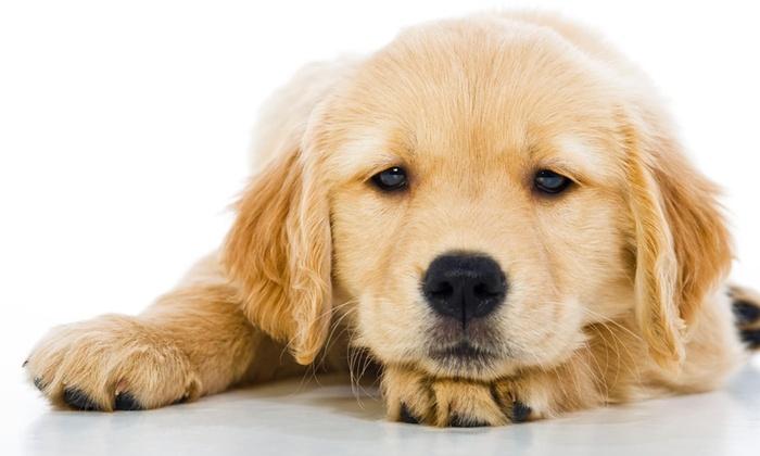 hammonasset animal clinic - Madison: $80 for $160 Worth of Pet Kennel Services — Hammonassett Animal Clinic