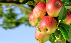 Five Fruit Trees (70% Off)