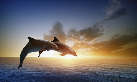 Afternoon or Sunset Dolphin Watching Cruise for One, Two, or Four from Breakaway Cruises (Up to 50% Off)