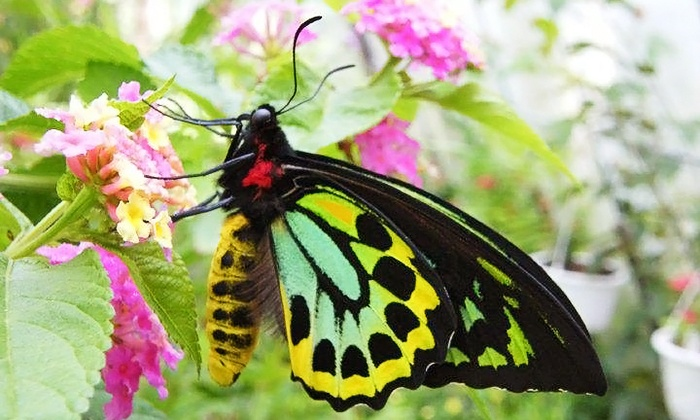 Newport Butterfly Farm - Tiverton: Admission for One, Two, or Up to 15 at Newport Butterfly Farm (Up to 67% Off)