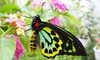 Up to 67% Off Admission to Newport Butterfly Farm