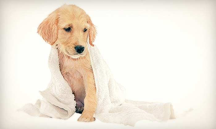 The Pooch Mobile - MacDonald Ranch: Dog Washing for Small, Medium, Large, and Extra-Large Dogs from The Pooch Mobile (Up to 57% Off)
