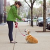 Up to 51% Off Private Dog-Training Lesson